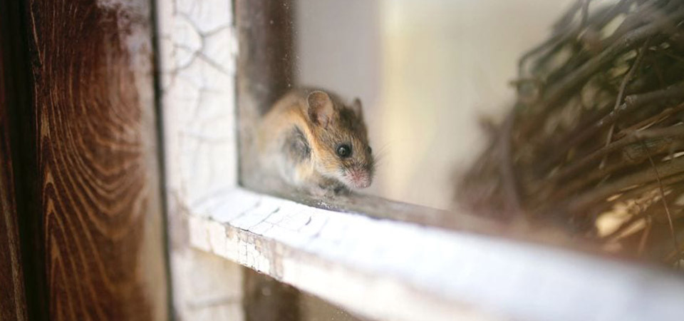 How To Keep Mice Out Of Your Shed