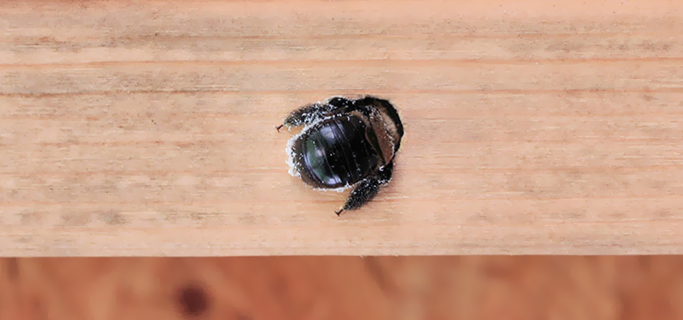 Preventive Tips For Pest Control: How To Keep Bugs Out Of Your Shed